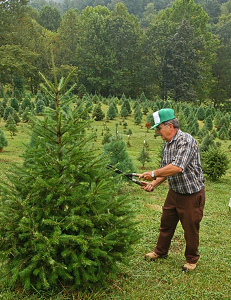 Christmas-Tree-Farm_330